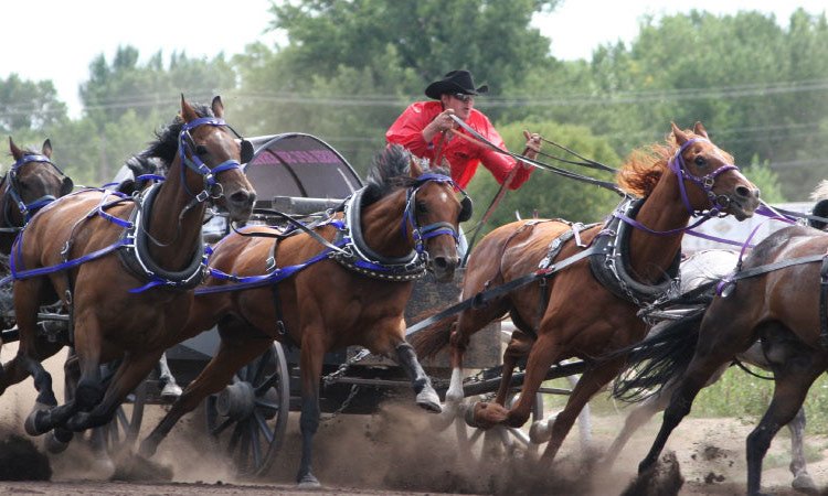 {World Pro Chuckwagons}